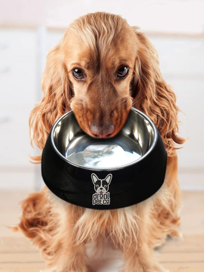 dog with bowl dog treats