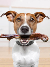 Bully stick dog treat