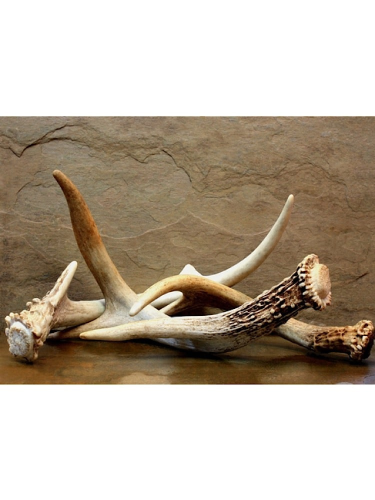 Photograph of 3 large cut deer antlers for dogs bunched together with a brown slate background