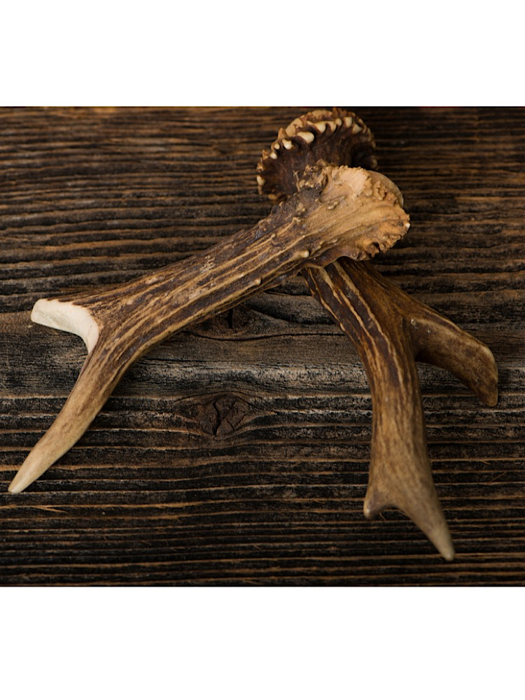 Photograph of two brown cut deer antlers crossed over each other on a brown wooden bench