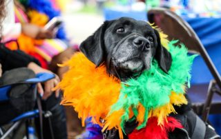 black dog wearing a colourful feather boa