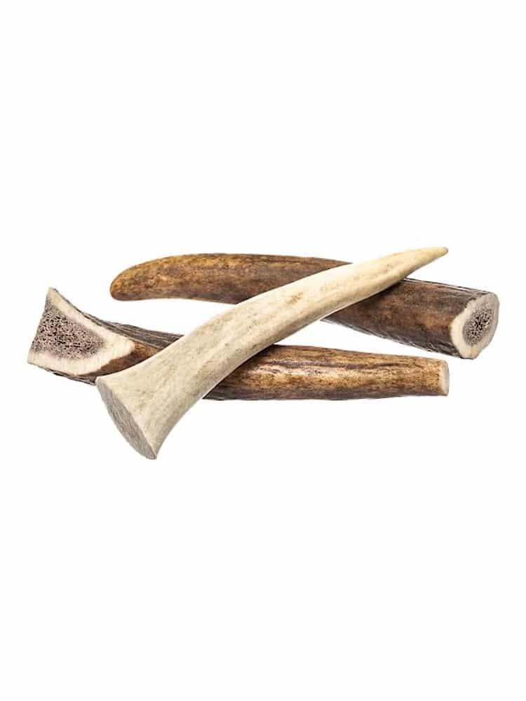 Photograph of three whole deer antlers for dogs. On a white background.