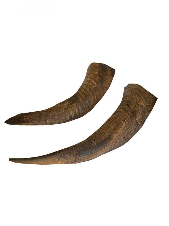 Drool Pet Co.Goat Horns.