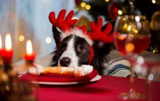 dog eating bone on christmas table