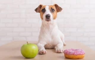 dog with donut and apple