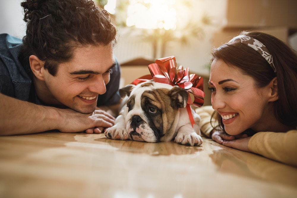 Smiling Young Couple Enjoying With a puppy